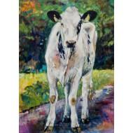 Bons Holsteins Dikkie 61