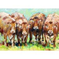 Limousin koppel