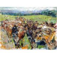 Jersey herd. New Zealand